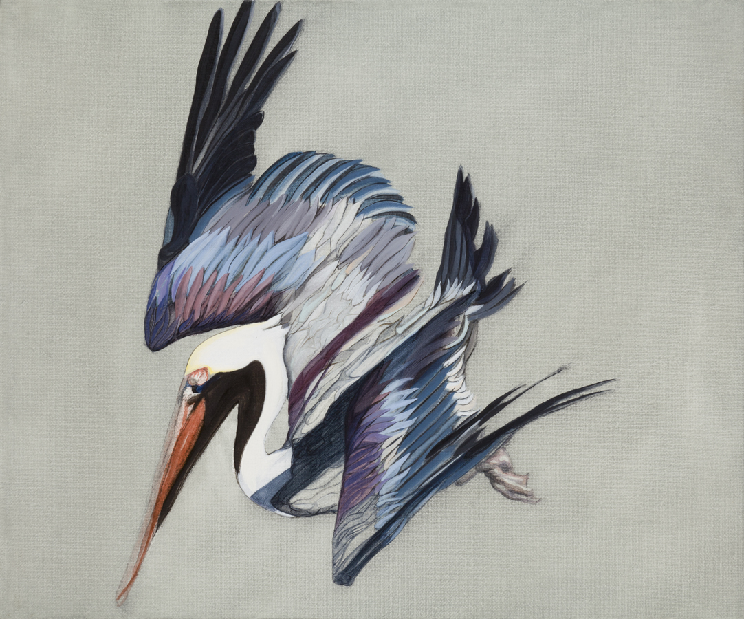 Pelecanus occidentalis, western water carrier, oil on canvas, 25x30m
